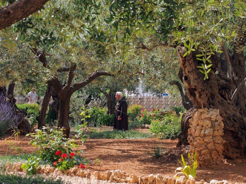 Monje contemplativo, jardín en Gethsemane, Jerusalén, imagen de archivo