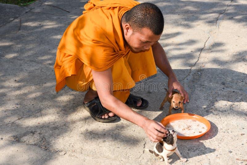 Monje que acaricia perros jovenes en Battambang en Camboya imágenes de archivo libres de regalías