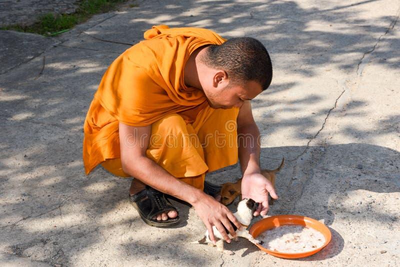 Monje que alimenta perros jovenes en Battambang en Camboya foto de archivo