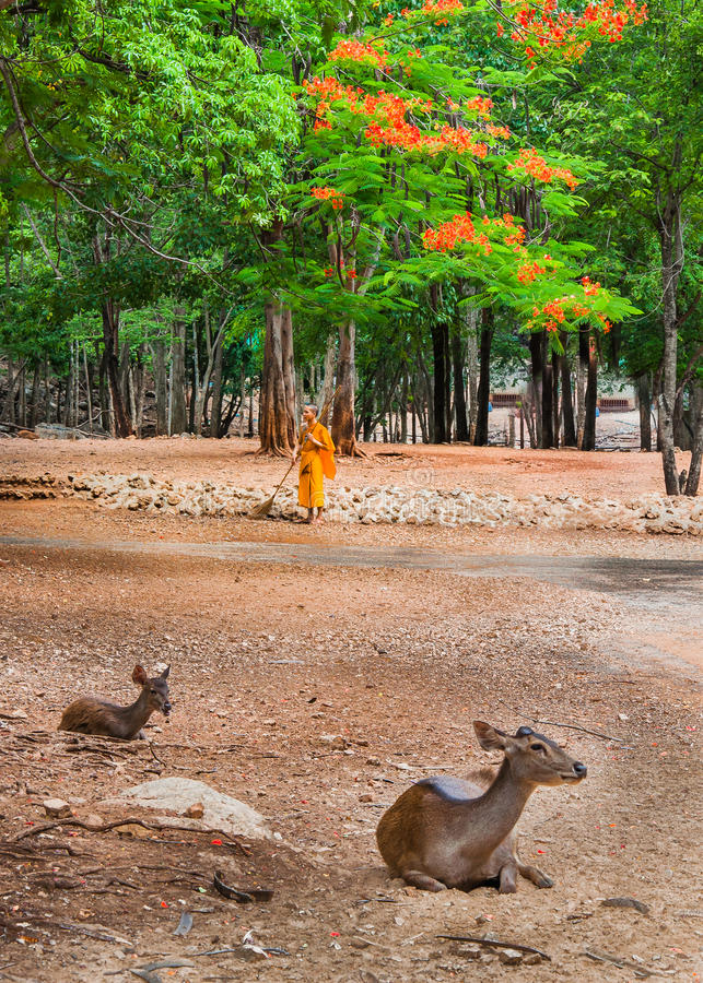 Download Monk Doing Daily Cleaning Routine At At The Tiger Temple In Kanchanaburi, Thailand. Editorial Image - Image: 42850195