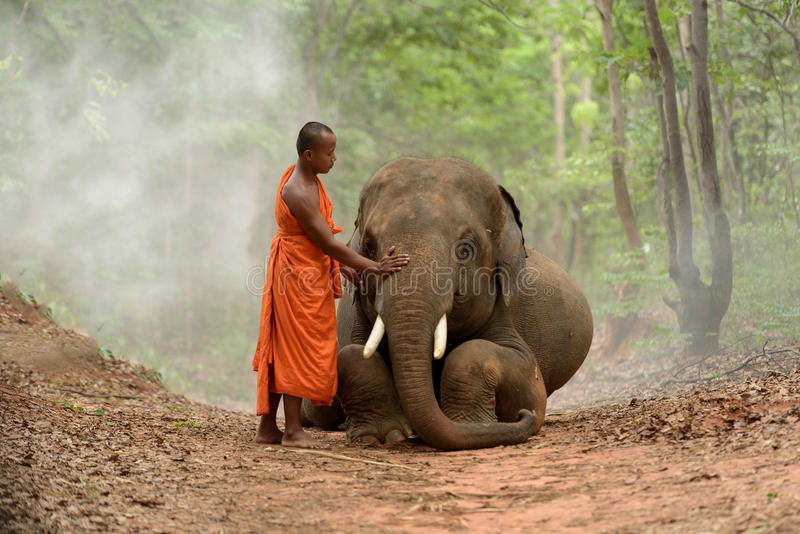 Monk and elephant. Monk and big elephant sitting beside in the forest stock photos