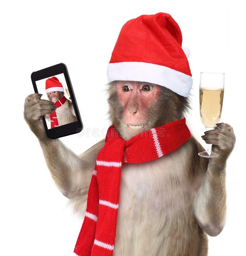 Monkey при шляпа santa рождества принимая selfie и smilin стоковое изображение