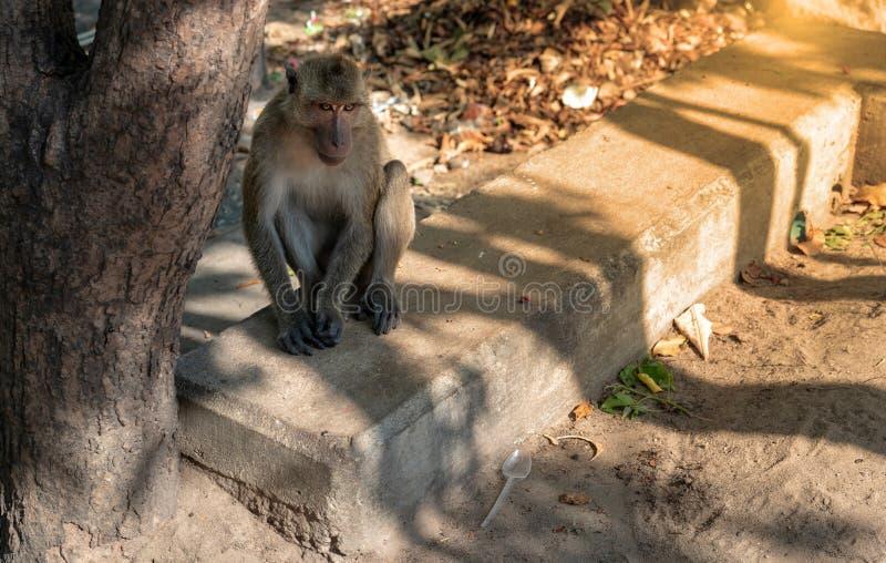 Monkey сидеть на конкретной ждать еде стоковые фото
