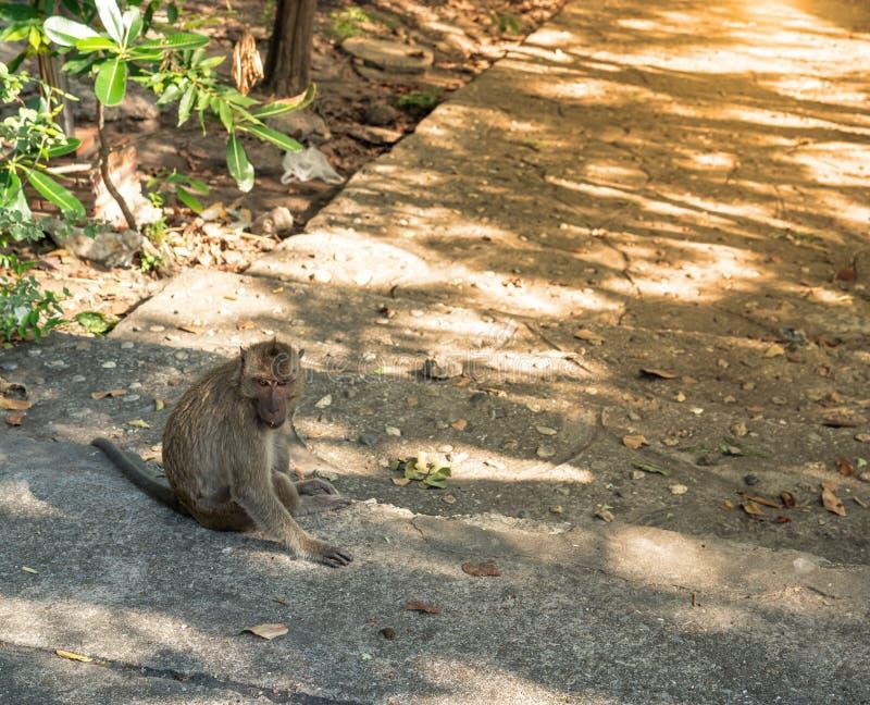 Monkey сидеть на конкретной ждать еде стоковое фото
