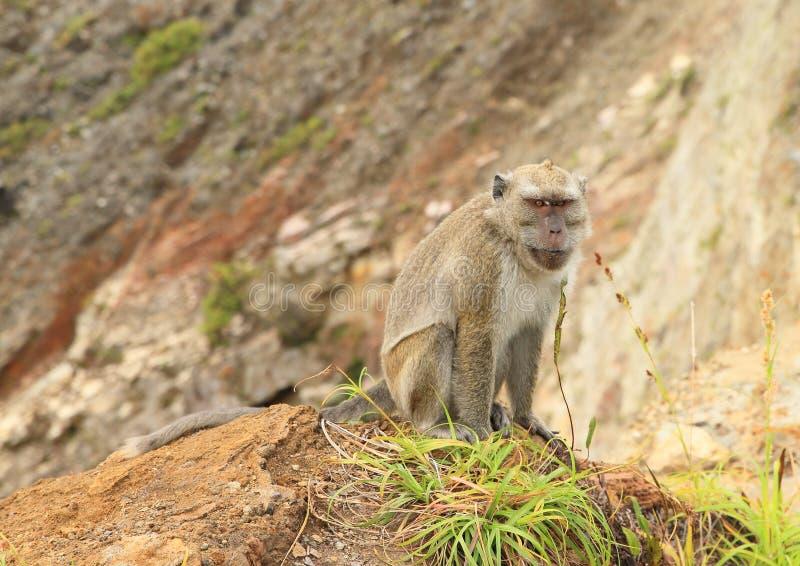 Monkey сидеть на крае кратера на Kelimutu стоковая фотография