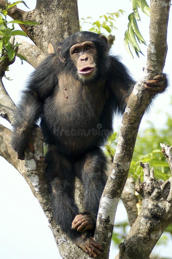 monkey те стоковое фото rf