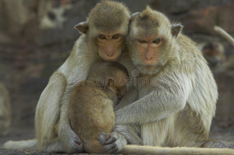 monkey-12 fotos de archivo