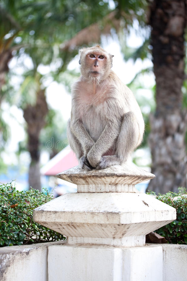 Download Monkey stock image. Image of face, brown, sitting, park - 14510655