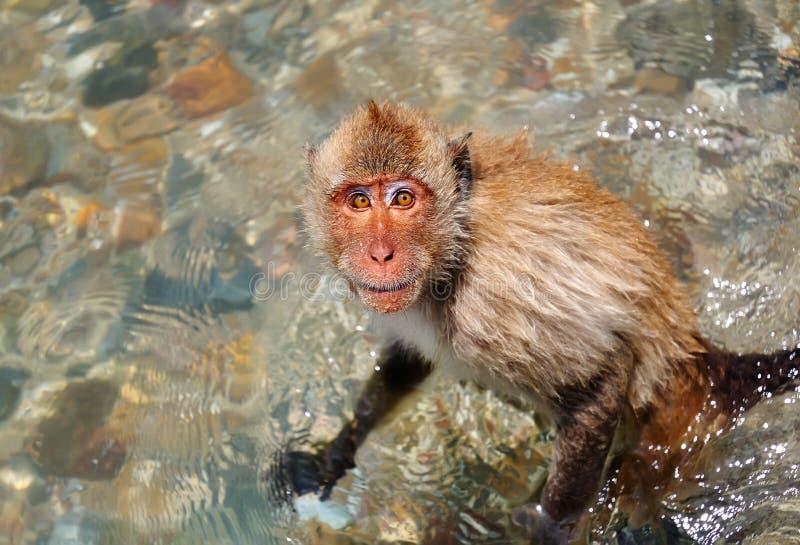 Download Monkey stock photo. Image of island, travel, vacation - 17566712