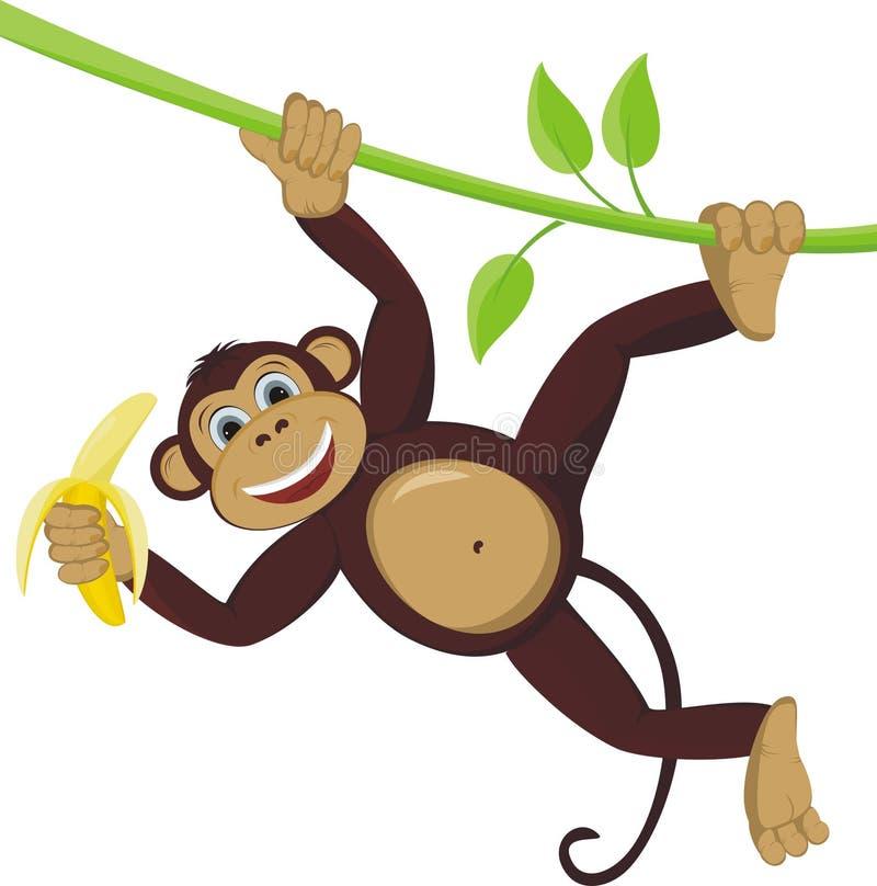 Monkey. On liana with banana