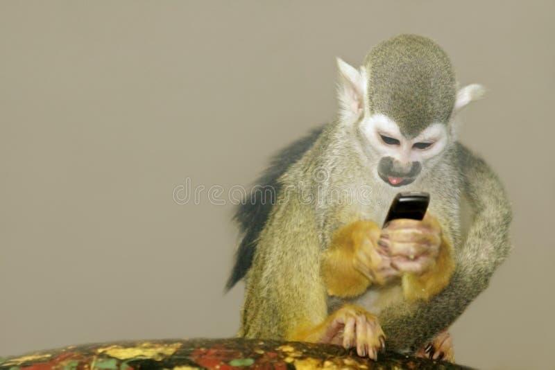 Monkey-2 fotos de stock royalty free
