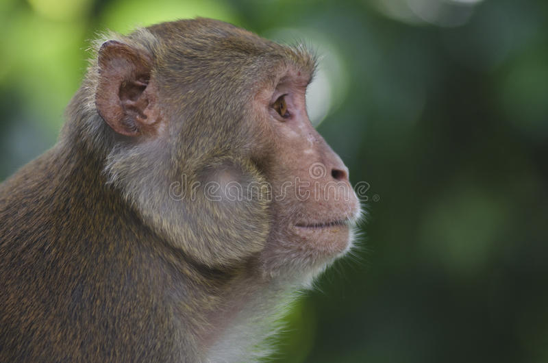 Download Monkey stock photo. Image of protected, face, mother - 21085196