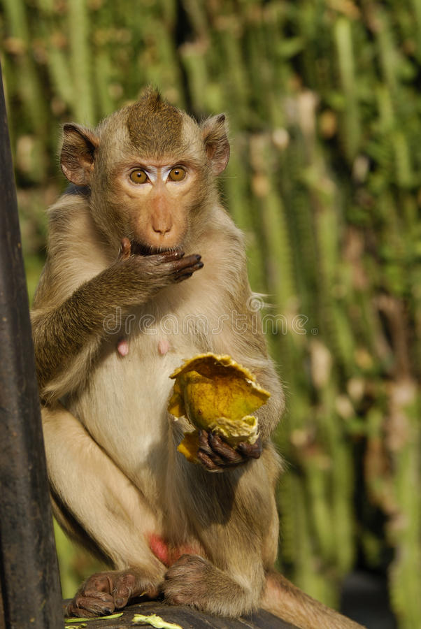 Download Monkey Royalty Free Stock Image - Image: 23773596