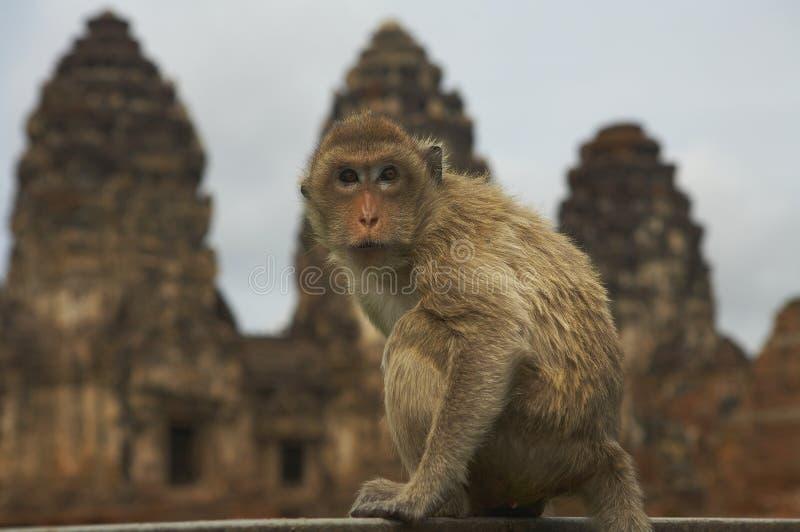 monkey-25 stock photography