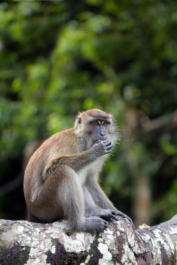 Download Monkey stock image. Image of munch, creature, beast, tailed - 27731781
