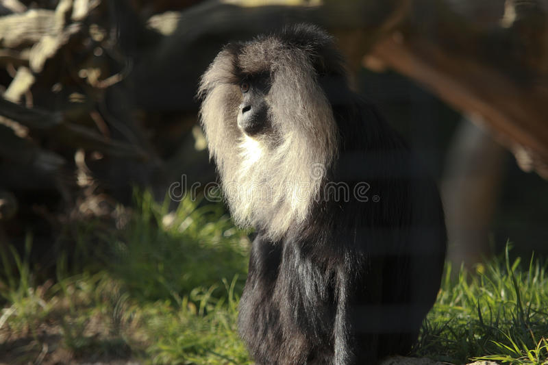 Download Monkey stock image. Image of white, food, quite, tail - 28457809