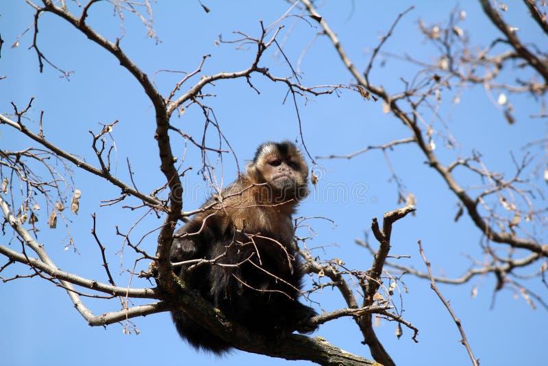 Download Monkey Royalty Free Stock Photo - Image: 28914615