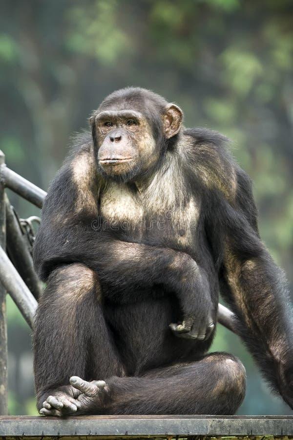 Monkey. In the zoo stock photos