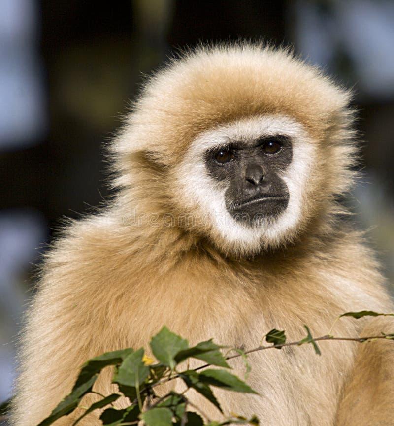 Free Monkey Stock Photos - 3491423