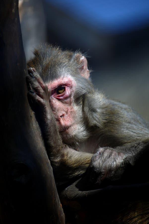 Free Monkey Stock Photography - 4547932