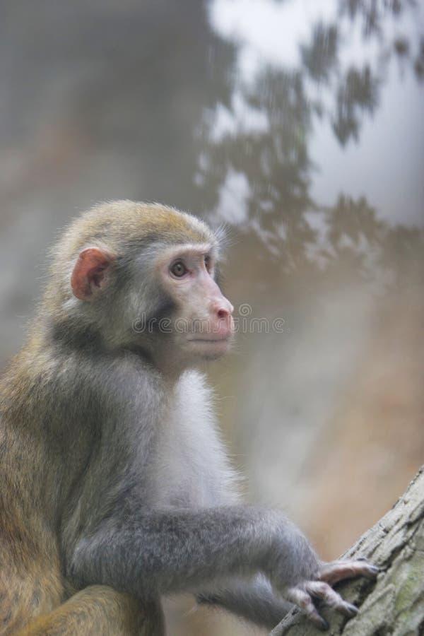 Free Monkey Stock Photos - 6320033