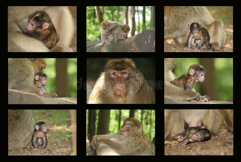 Download Monkey stock photo. Image of park, caring, protection, animal - 891844