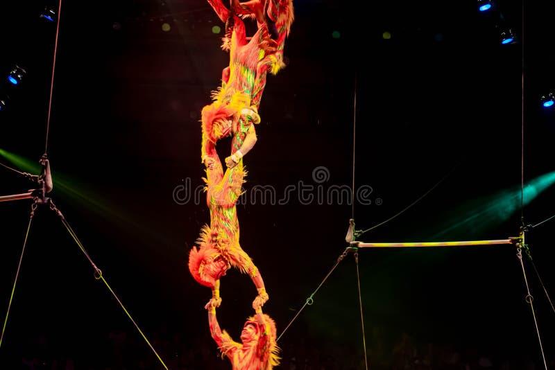 Monkey acrobats in Lion King Festival at Animal Kingdom 45 royalty-vrije stock afbeelding