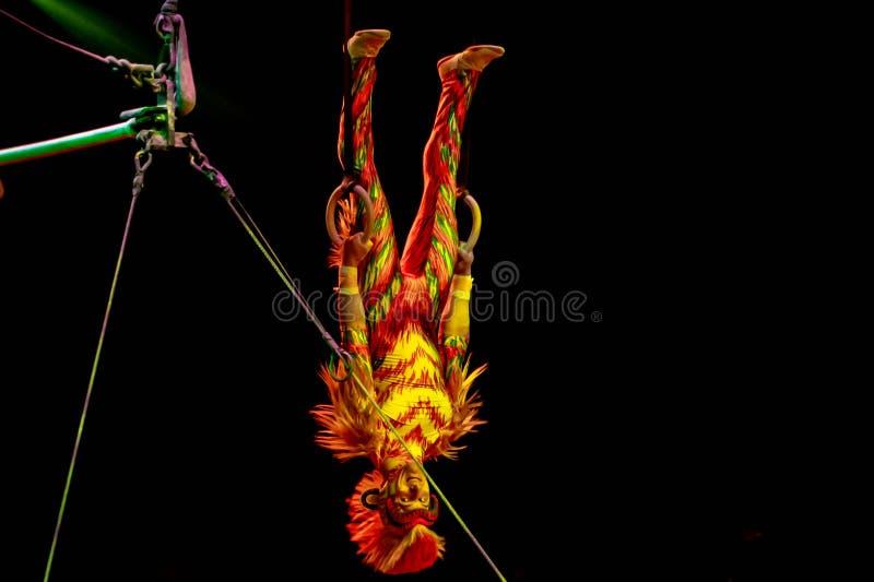 Monkey acrobats in Lion King Festival at Animal Kingdom 42 stock foto's