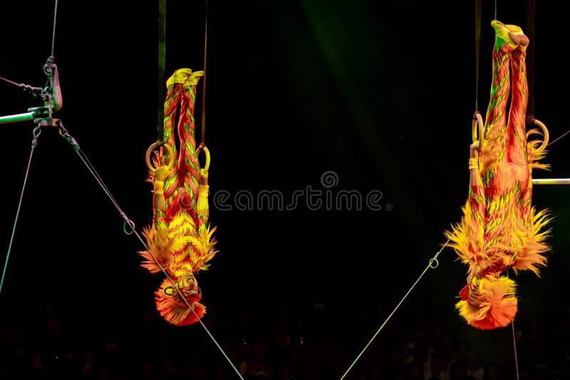 Monkey acrobats in Lion King Festival at Animal Kingdom 43 royalty-vrije stock foto