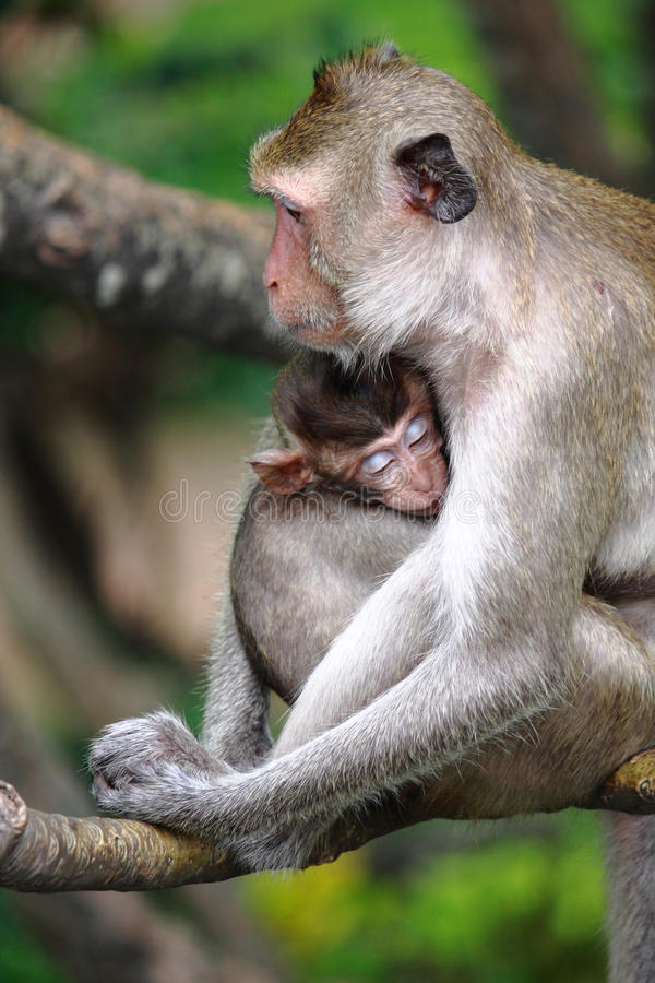 Free Monkey And Baby Stock Photo - 15800720