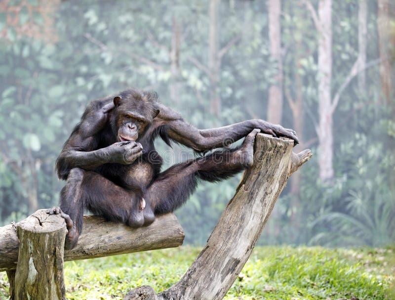 Monkey Antics Stock Photo Image Of Business Fierce