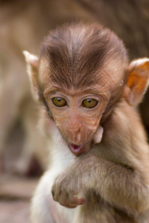 The Monkey Baby royalty free stock image