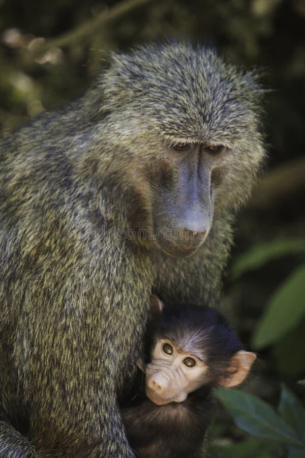 Download Monkey stock image. Image of creature, jungle, cute, pretty - 36700747