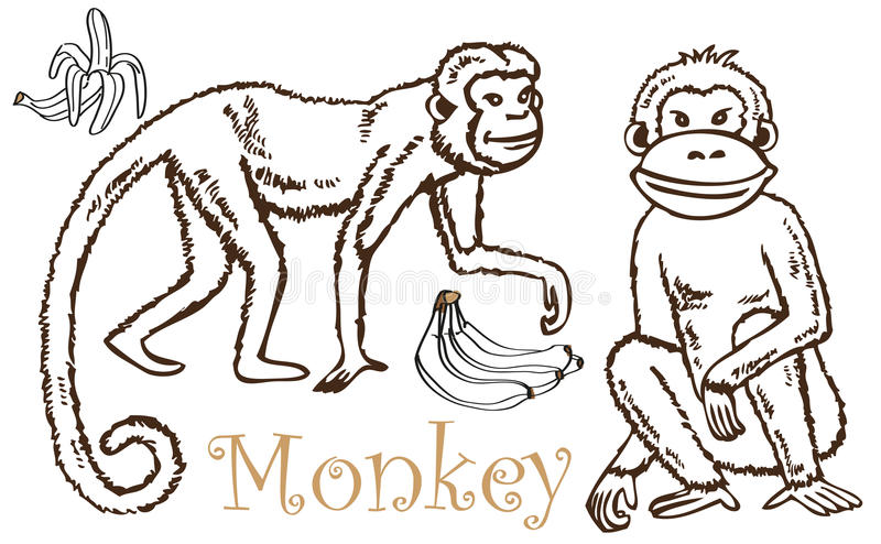 Monkey and Bananas drawing stock vector. Illustration of ...