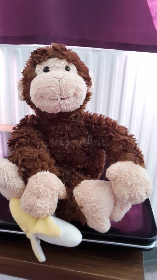 Monkey with Banane royalty free stock images
