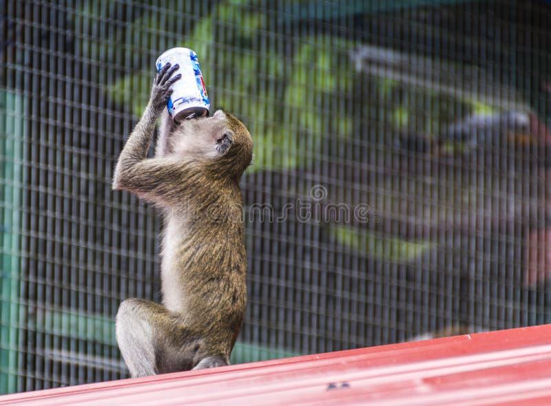 Download Monkey at batu caves stock image. Image of eating, playful - 55098223