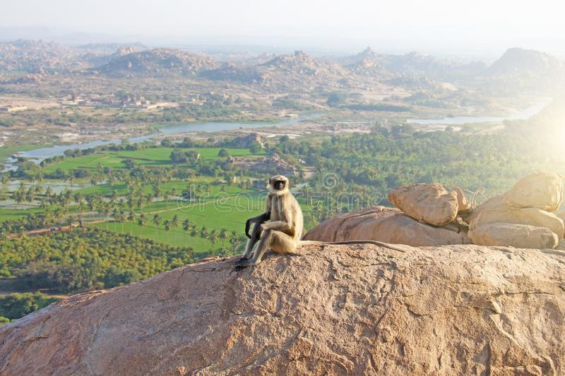 A monkey with a black face or snout sits on top of a mountain in India, Hampi, on Mount Hanuman.  stock photography