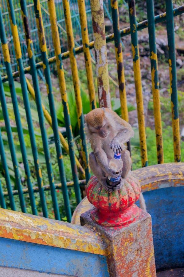 Monkey Business at Batu Caves, Malaysia stock photo