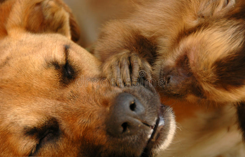 Download Monkey caring for a dog stock image. Image of impossible - 15267013