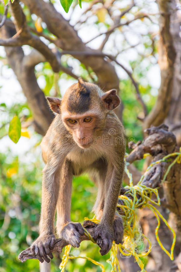 A monkey is climbing on the branch. royalty free stock photo