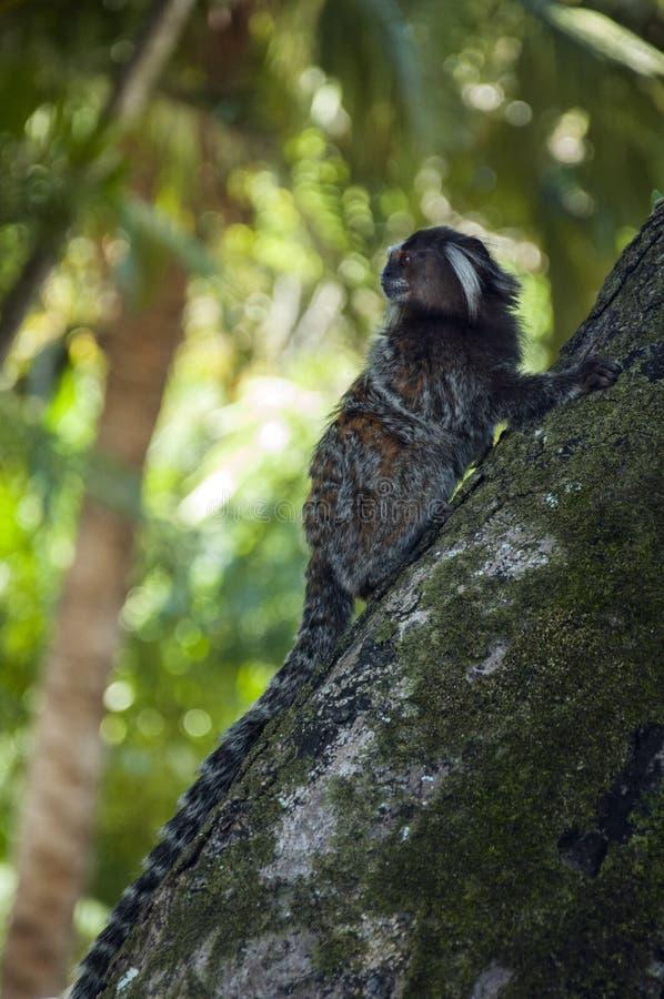 Monkey climbing a tree royalty free stock photography