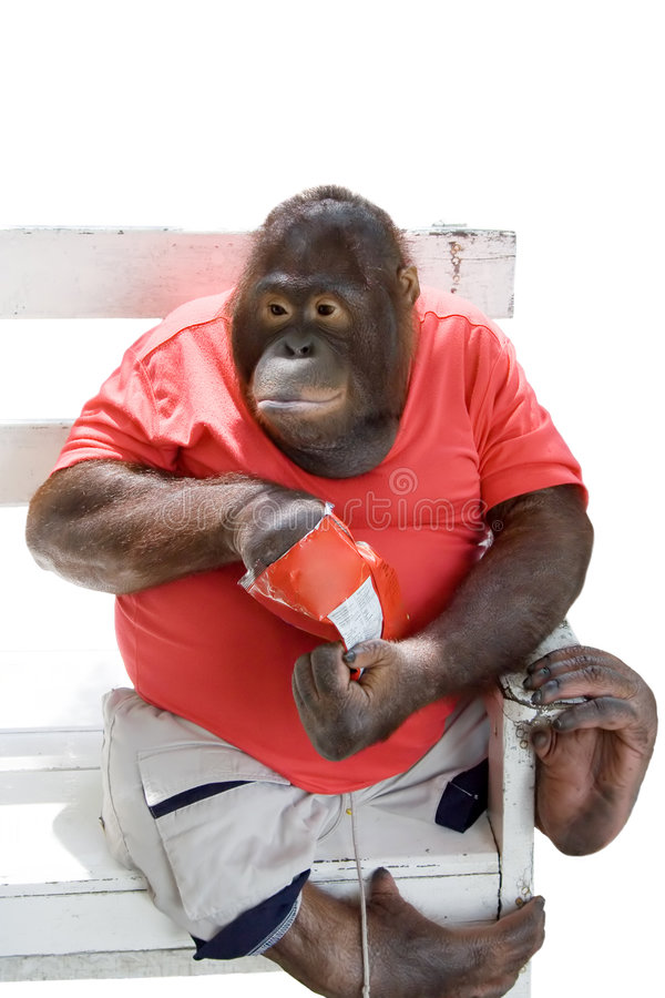 Download Monkey eating chips stock image. Image of unhealthy, food - 816171