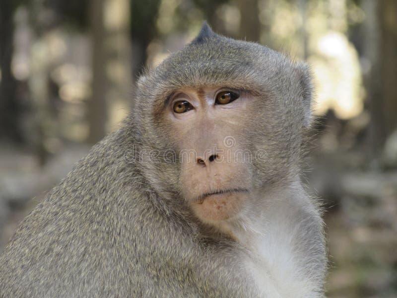 Monkey en la selva fotos de archivo