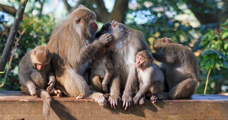 Monkey en Shoushan, montaña del mono en la ciudad de Gaoxiong, Taiwán fotografía de archivo libre de regalías