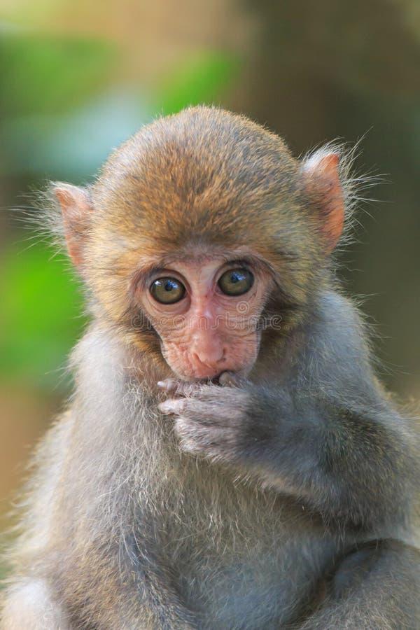 Monkey en Shoushan, montaña del mono en la ciudad de Gaoxiong, Taiwán foto de archivo libre de regalías