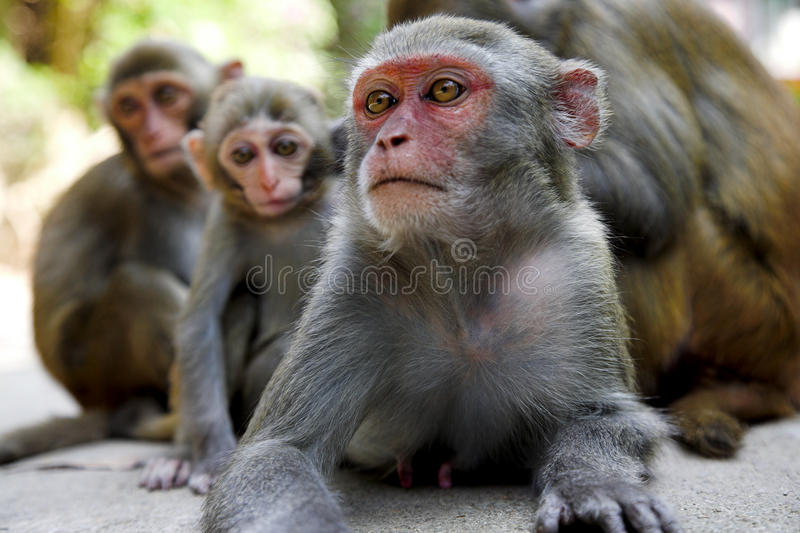 Download Monkey family stock photo. Image of primate, baby, clean - 18858042