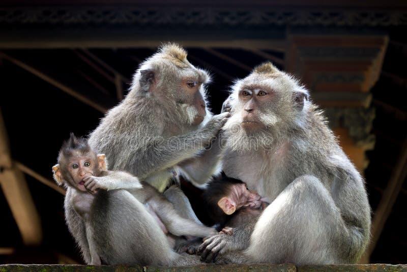 Download Monkey Family Stock Photos - Image: 25886883