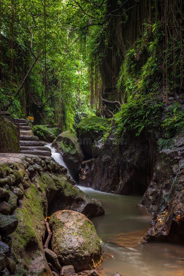 Download Monkey Forest Sanctuary, Ubud, Bali Stock Image - Image of indonesia, travel: 69131619