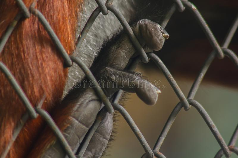 The monkey hand holding the cage stock photos