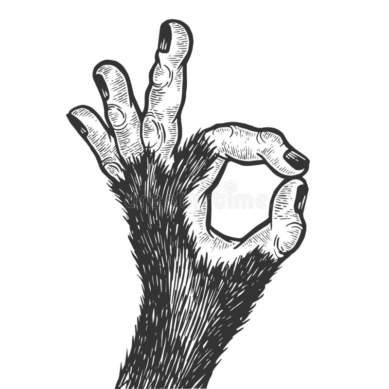 Monkey hand ok gesture sketch engraving vector. Monkey animal hand with ok gesture sketch engraving vector illustration. Good sign. Scratch board style imitation royalty free illustration